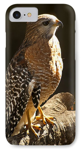 Red-shouldered Hawk Phone Case by Carolyn Marshall