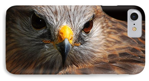 Red-shouldered Hawk IPhone Case by Lorenzo Cassina