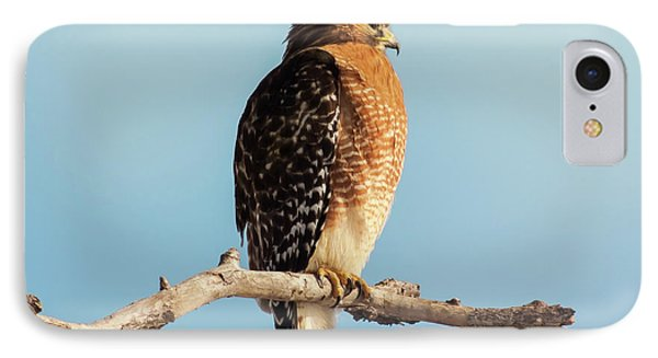 Red-shouldered Hawk Portrait IPhone Case by Robert Frederick