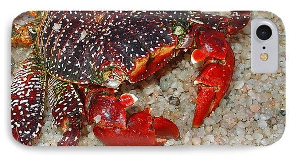 Red Spotted Crab Phone Case by Karon Melillo DeVega