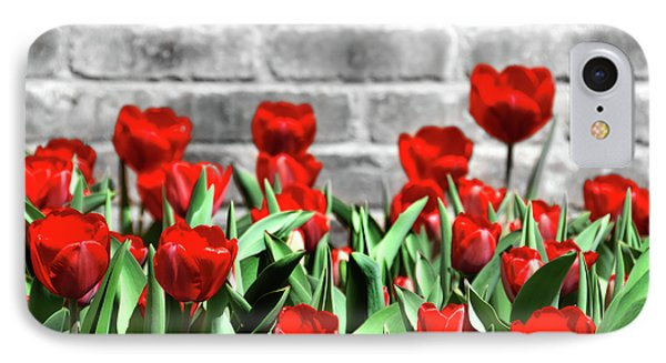 Red Spring Tulips IPhone Case by Angelina Vick