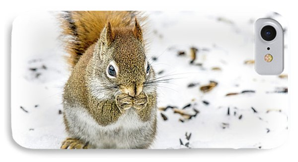 Red Squirrel IPhone Case by Irwin Seidman