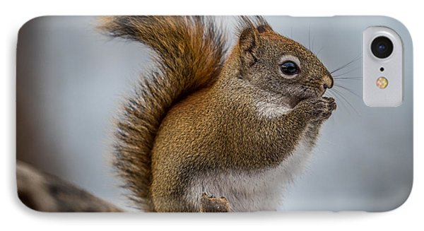 Red Squirrel IPhone Case by Paul Freidlund