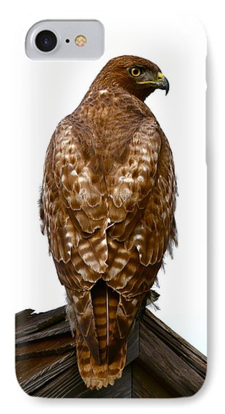 Red Tail Hawk IPhone Case by Paul Marto