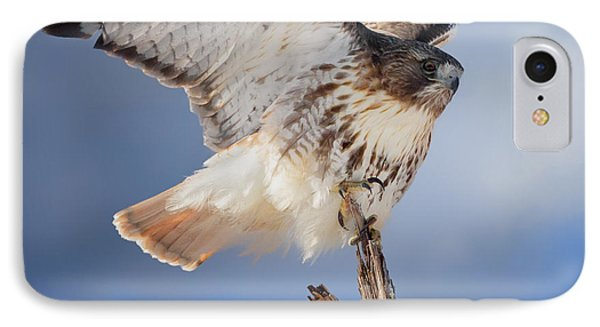 Red Tail Hawk Perch IPhone Case by Bill Wakeley
