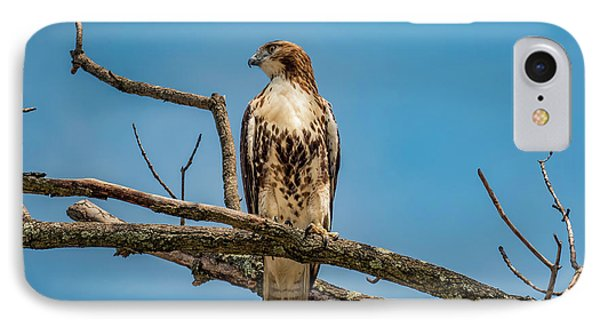 Red Tail Hawk Perched IPhone Case