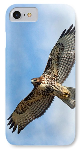 Red Tail Hawk IPhone Case by Randall Ingalls