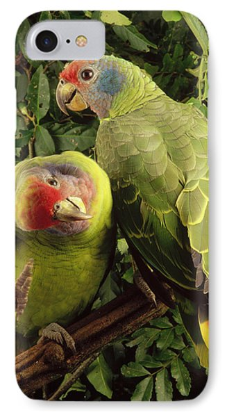 Red-tailed Amazon Amazona Brasiliensis Phone Case by Claus Meyer