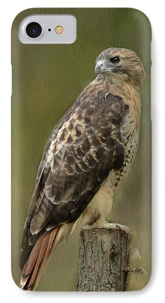 Red-tailed Hawk IPhone Case by Ann Bridges