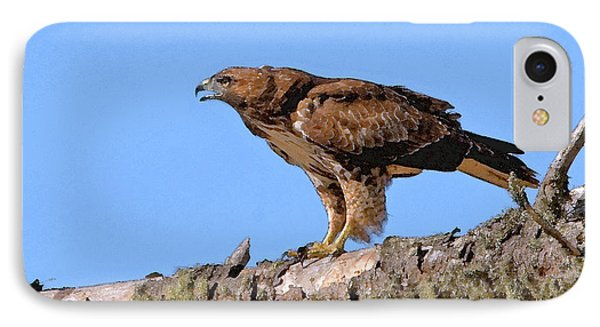 Red-tailed Hawk IPhone Case by Betty LaRue