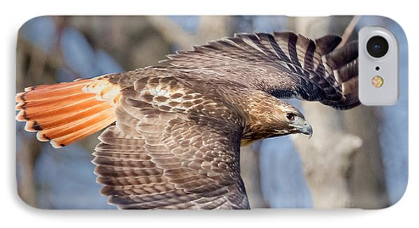 Red Tailed Hawk Flying IPhone Case by Bill Wakeley