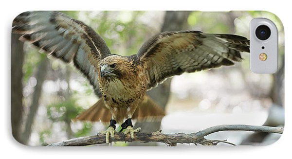Red-tailed Hawk  IPhone Case by Juli Scalzi