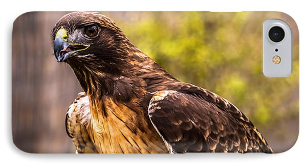 Red Tailed Hawk Profile 2 IPhone Case
