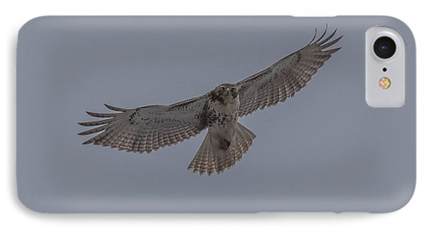 Red Tailed Hawk Soaring IPhone Case by Paul Freidlund