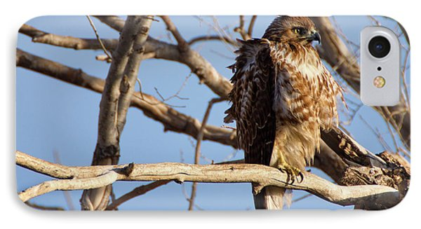 Red Tailed IPhone Case by John De Bord