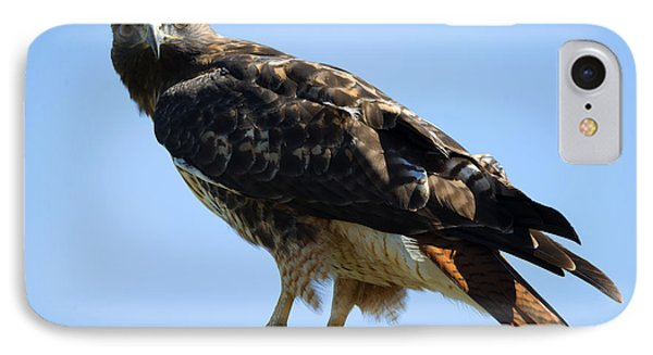 Red-tailed Stare IPhone Case by Mike Dawson