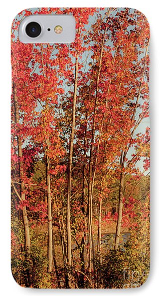 IPhone Case featuring the photograph Red Trees by Iris Greenwell