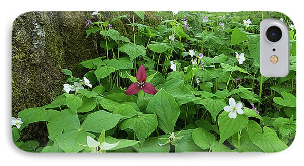 Red Trillium At Center IPhone Case by Alan Lenk