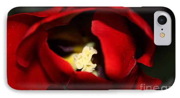 IPhone Case featuring the photograph Red Tulip by Jolanta Anna Karolska