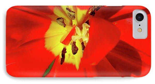 Red Tulip Phone Case by Nina Ficur Feenan