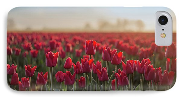 Red Tulips 2 IPhone Case