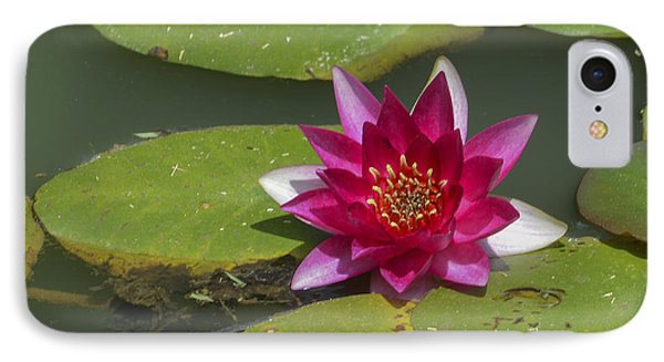 Red Water Lily Phone Case by Linda Geiger