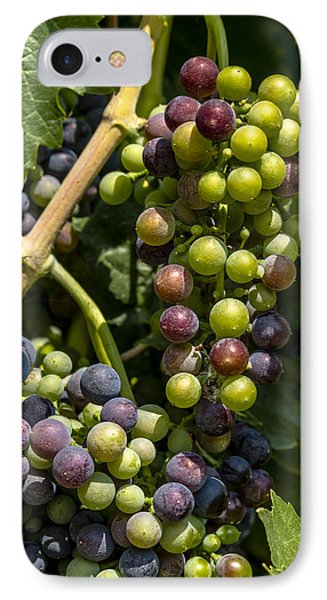 Red Wine Grape Colors In The Sun IPhone Case by Teri Virbickis