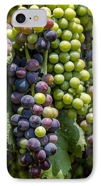 Red Wine Grapes In The Vineyard IPhone Case by Teri Virbickis