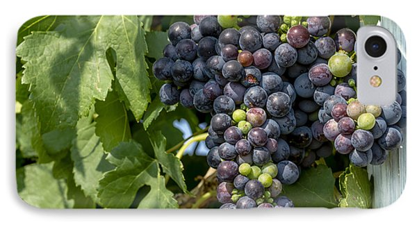 Red Wine Grapes On The Vine IPhone Case by Teri Virbickis