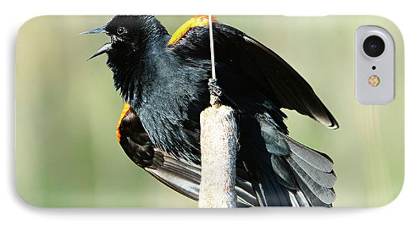 IPhone Case featuring the photograph Red-winged Blackbird by Jack Moskovita