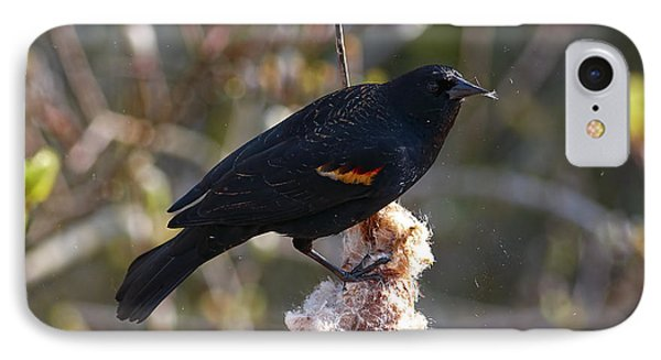 IPhone Case featuring the photograph Red-winged Blackbird On Cattail Reed by Sharon Talson