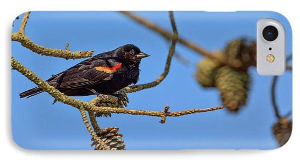Red-winged Blackbird  IPhone Case by Rick Berk