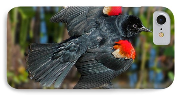 Red-winged Blackbird IPhone Case by Suzanne Stout