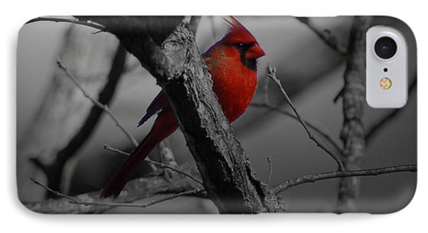 Redbird Phone Case by Shawn Wood