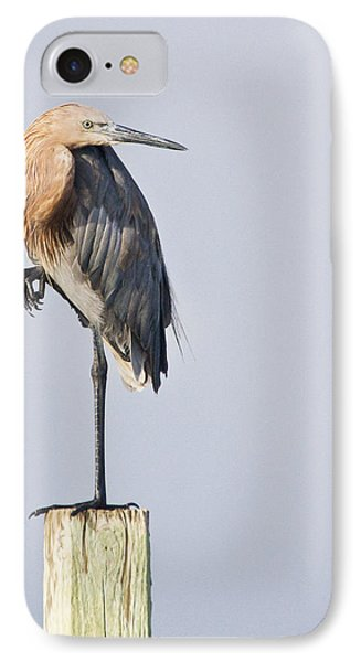 IPhone Case featuring the photograph Reddish Egret On Piling by Bob Decker