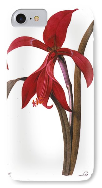 Redout�: St. James Lily Phone Case by Granger