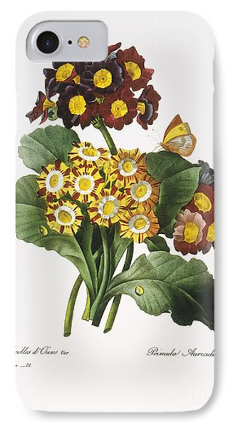 Redoute: Auricula, 1833 Phone Case by Granger