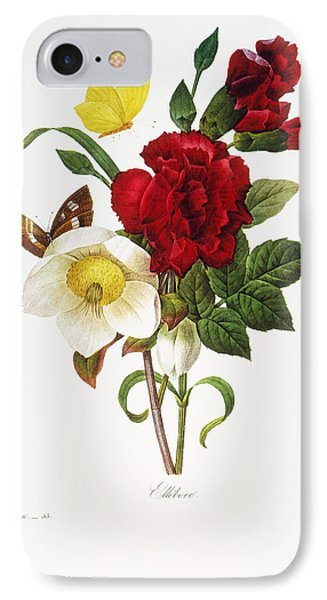 Redoute: Hellebore, 1833 IPhone Case by Granger
