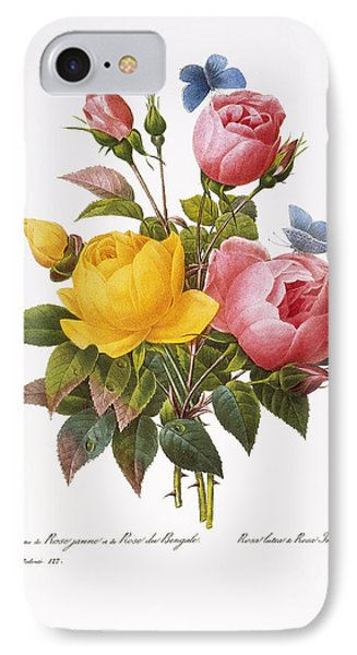 Redoute: Roses, 1833 IPhone Case by Granger