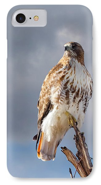 Redtail Portrait IPhone Case by Bill Wakeley