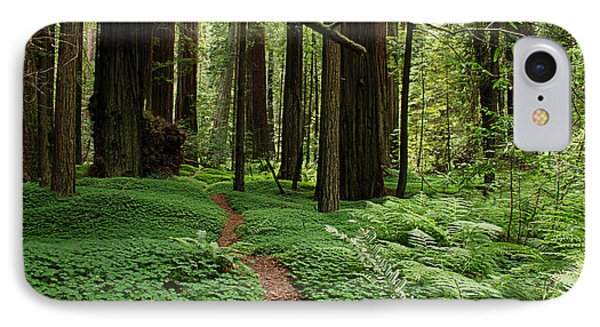 Redwood Forest Path Phone Case by Melany Sarafis