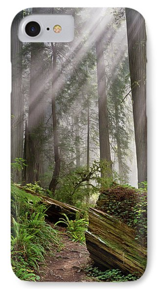 Redwood Light IPhone Case by Greg Nyquist