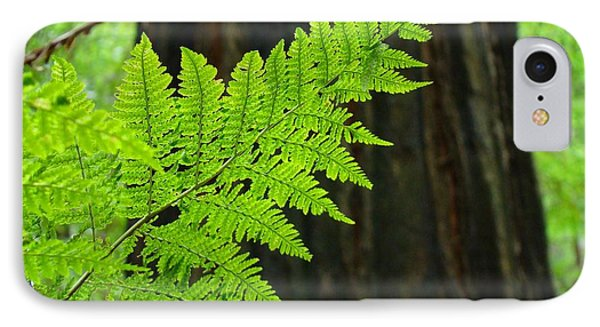 Redwood Tree Forest Ferns Art Prints Giclee Baslee Troutman Phone Case by Baslee Troutman