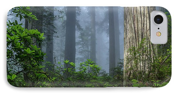 Redwoods In Blue Fog IPhone Case by Greg Nyquist