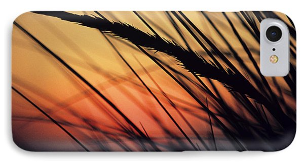 Reeds And Sunset Phone Case by Brent Black - Printscapes