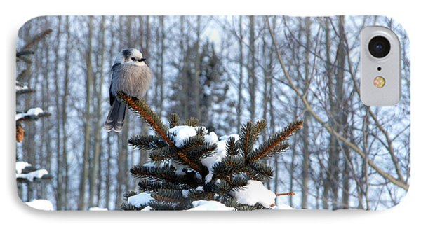 Refined Little Gray Jay In Colorado IPhone Case by Carol M Highsmith