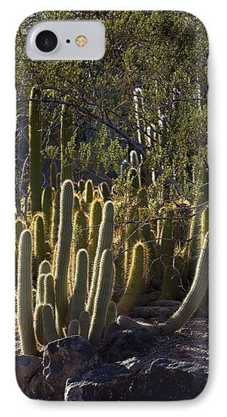 IPhone Case featuring the photograph Reflecting The Sunshine by Phyllis Denton