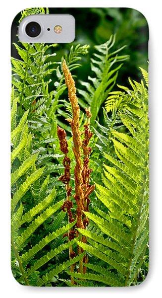 Refreshing Fern In The Woodland Garden IPhone Case