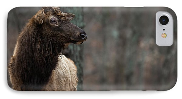 Regal IPhone Case by Andrea Silies