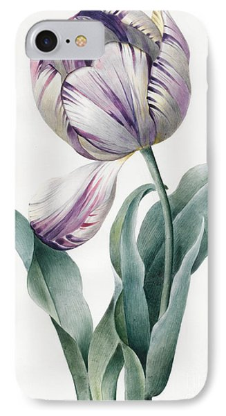 Rembrandt Tulip IPhone Case by Louise D'Orleans